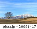 一本桜 岩手山 桜の写真 29991417