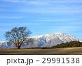 一本桜 岩手山 桜の写真 29991538