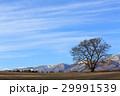 一本桜 岩手山 桜の写真 29991539