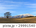 一本桜 岩手山 桜の写真 29991540