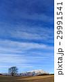 一本桜 岩手山 桜の写真 29991541