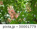 樹木 樹 ツリーの写真 30001779