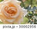 背景 花 フローラルの写真 30002956