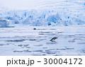 ペンギン 30004172
