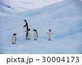 ペンギン 30004173