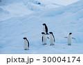 ペンギン 30004174