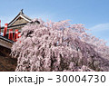 上田城の桜 30004730