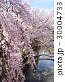 上田城の桜 30004733