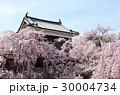 上田城の桜 30004734