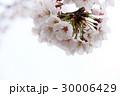 サクラ04 30006429
