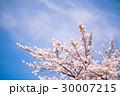 さくら サクラ 桜の写真 30007215
