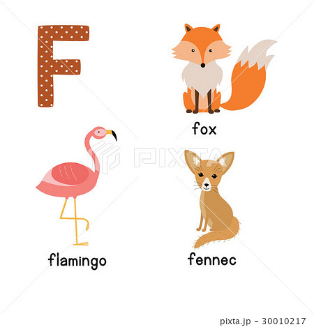Letter F. Cute animals. Flamingo Fennec Fox. Funnyのイラスト素材 [30010217] - PIXTA