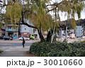 鶴見橋のシダレヤナギ 30010660