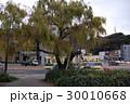 鶴見橋のシダレヤナギ 30010668