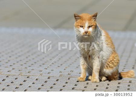 汚い猫 30013952