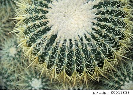 cactus flower 30015353