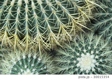 cactus flower 30015354
