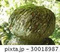 石 苔  30018987
