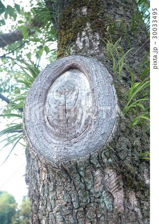 木の目 30033495