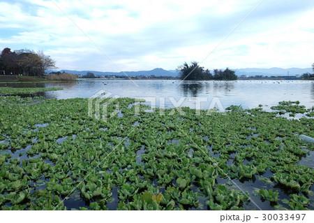 江津湖 30033497