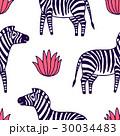 black and white zebra vector illustration 30034483