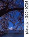 河口湖から桜の木と富士山 30049736