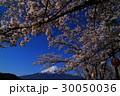 富士河口湖町サクラと富士山 30050036