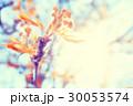 あき 秋 背景の写真 30053574