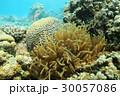 ダイバー ダイビング 潜りの写真 30057086