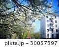 樹木 樹 ツリーの写真 30057397