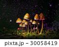 きのこ キノコ 茸の写真 30058419