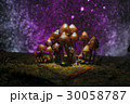 きのこ キノコ 茸の写真 30058787