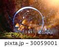 きのこ キノコ 茸の写真 30059001