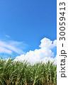 青空 雲 サトウキビの写真 30059413