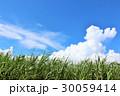 青空 雲 サトウキビの写真 30059414