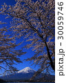 河口湖からの桜と富士山 30059746