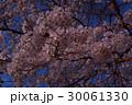 青空に桜の花(富士吉田市内) 30061330