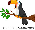 動物 鳥 マンガのイラスト 30062965