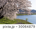 桜 ソメイヨシノ 白石川の写真 30064879