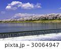 桜 ソメイヨシノ 白石川の写真 30064947