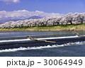 桜 ソメイヨシノ 白石川の写真 30064949