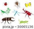 虫 30065136
