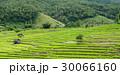 米 ご飯 飯の写真 30066160