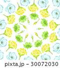 フラワー 花 菊科のイラスト 30072030