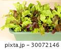 ベランダ菜園 30072146