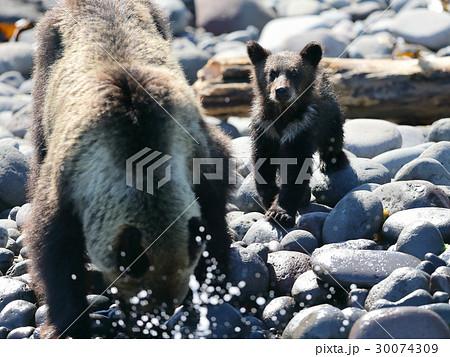 子熊の視線 30074309