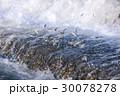 鮎の遡上 30078278