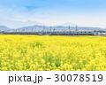 菜の花畑 園児 小田急線 1000形  30078519