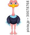 Ostrich cartoon 30078768