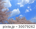 桜 青空 満開の写真 30079262